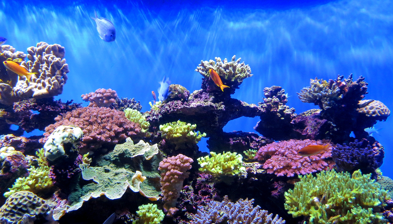 Image: A Coral Reef with its fishy residents