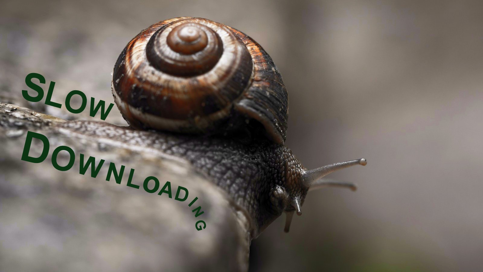 Image: A snail with the words slow download dripping off of him