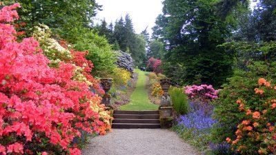 Image: Path cutting through flower garden