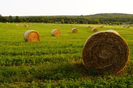 Image: Hay bails in field, fertilizer is one of the many potential uses for urine.