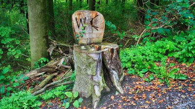 Image: stump that looks like a toilet