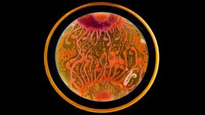 Image: bacteria art