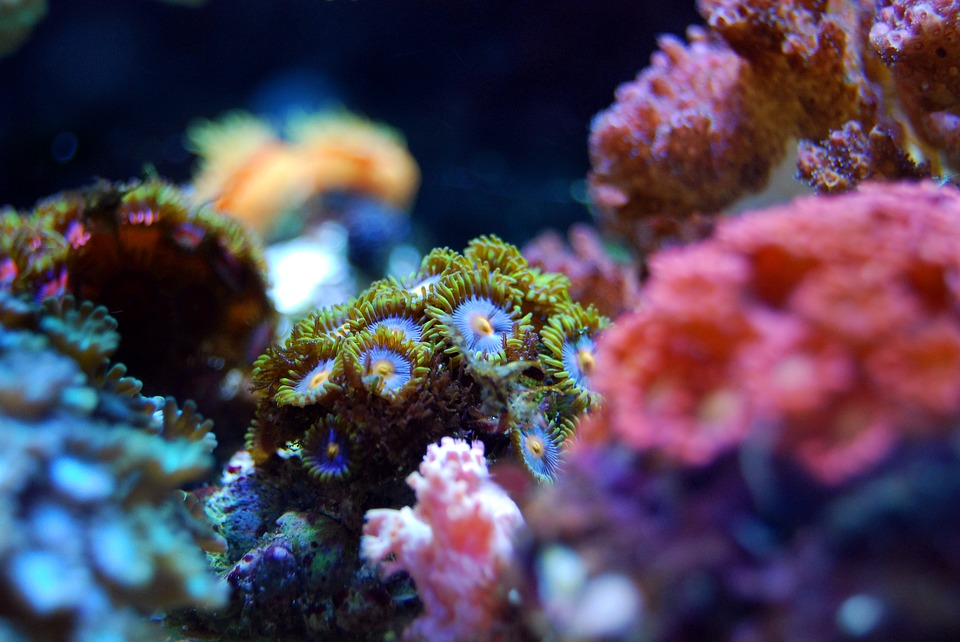 Coral of all different shapes and sizes