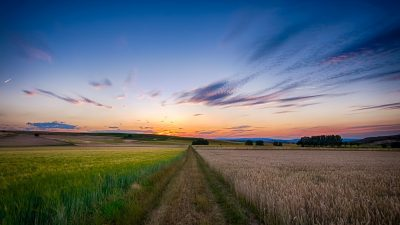 Image: A beautiful landscape of green wheat fields on one side and brown wheat fields on the other
