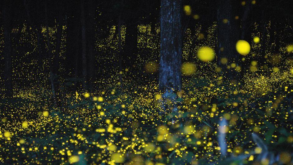 Image: Fireflies in woods