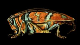 Image: Microsculpture is a photographic project be British photographer Levon Biss. Please email Levon for any enquiries. Longhorn Beetle, Nigeria.Species of the genus Sternotomis (Coleoptera, Cerambycidae).Once magnified the secret to the spectacular patterning of this beetle is revealed – a covering of extremely fine pigmented scales similar to those of butterflies and moths.