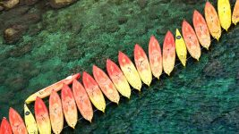 Image: Line of sea kayaks