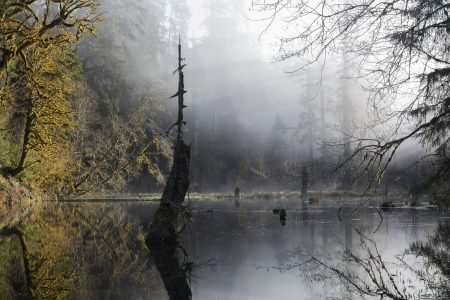 Image: Mist over a pond