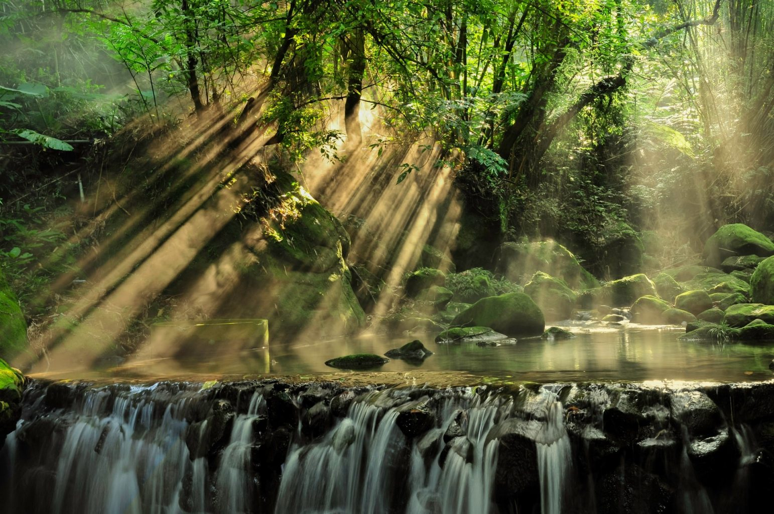 Image: Light streaming through the rainforest canopy to a waterfall