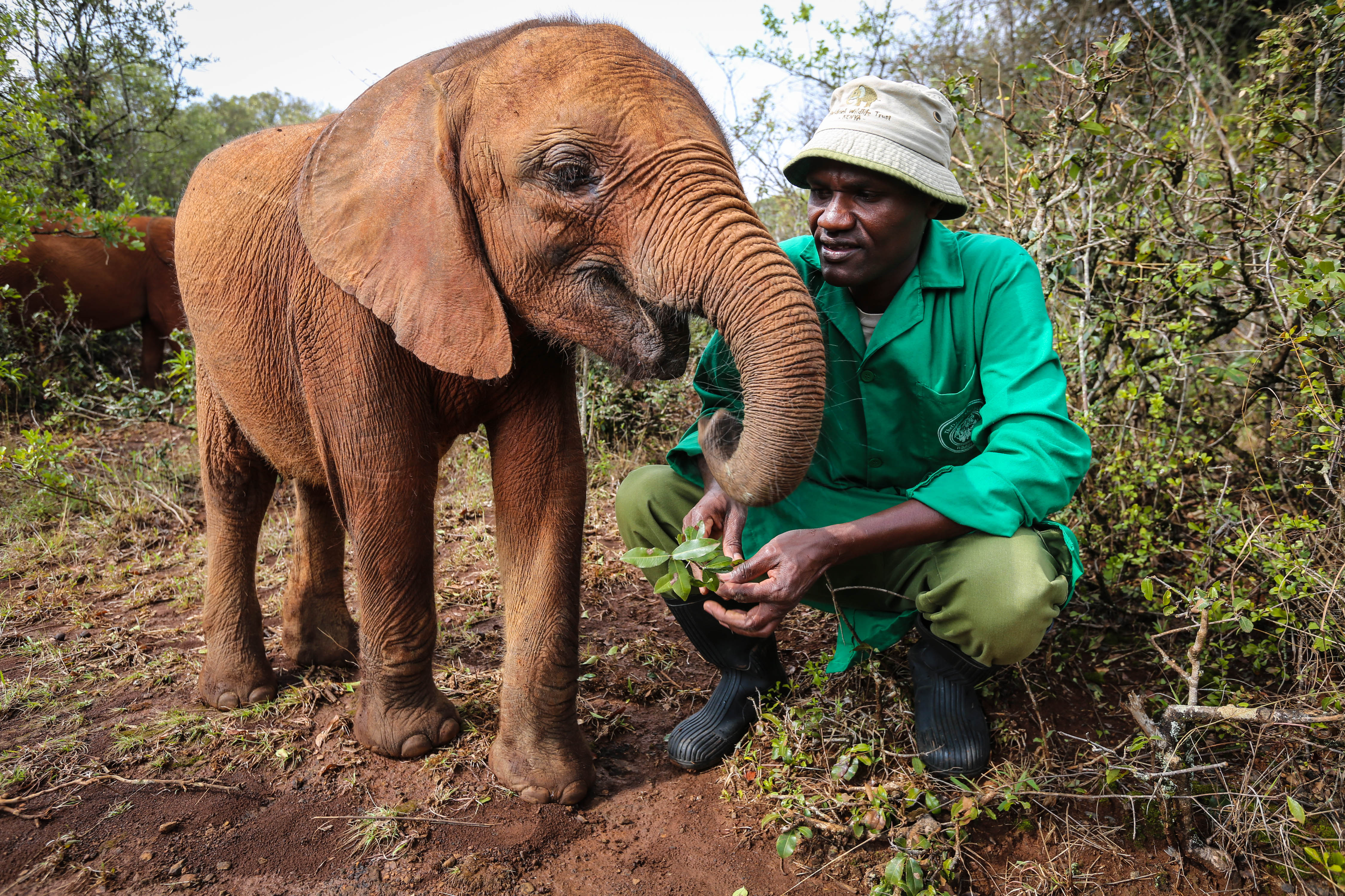 Image: Sheldrick Wildlife Trust keeper with a baby elephant