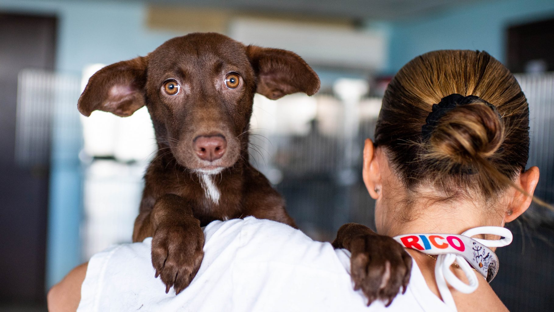 Image: Puppy looks over the shoulder of Chrissy Beckles, founder of the Sato Project