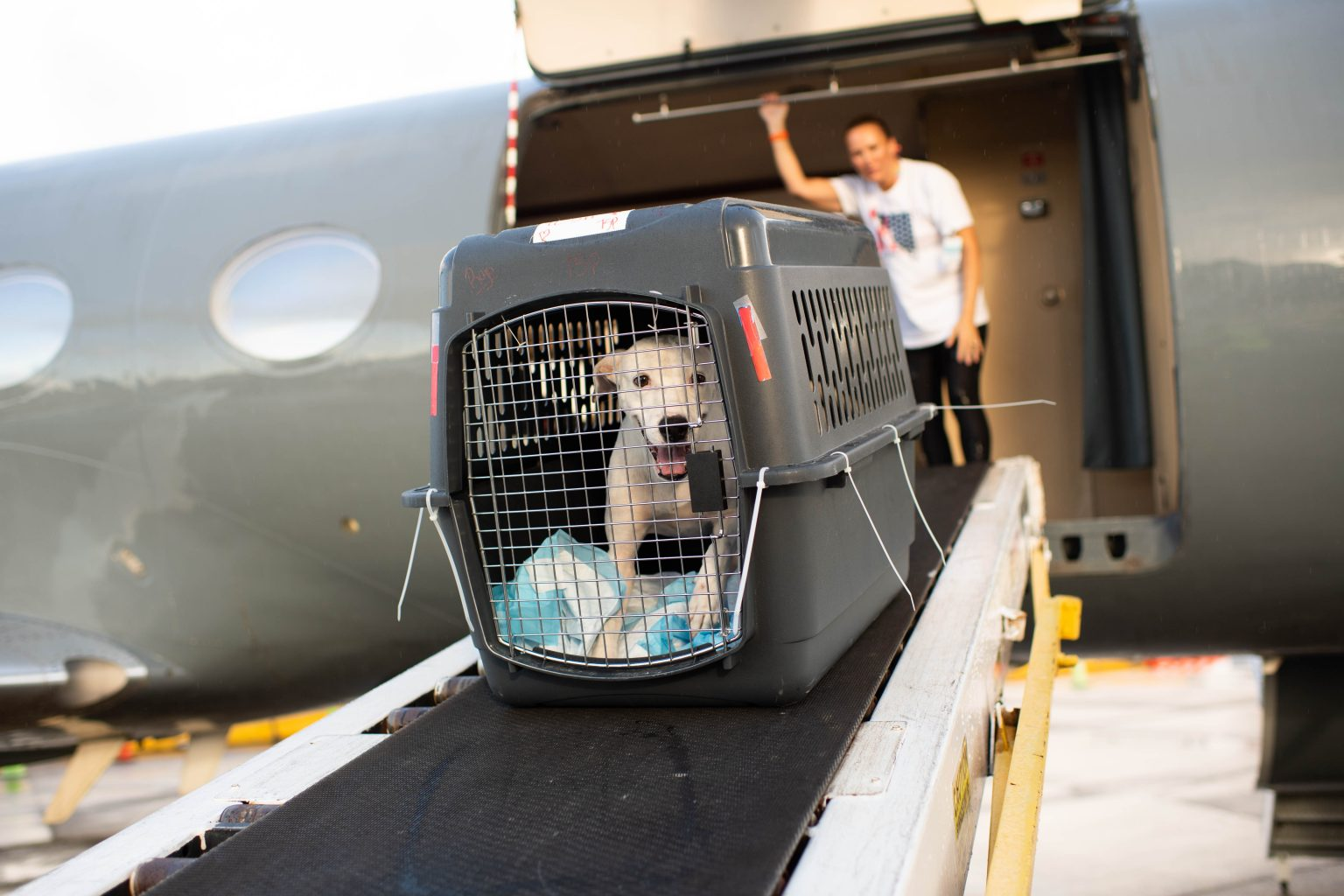 Image: One pup in their crate entering the plane to head off the island and onto the mainland!