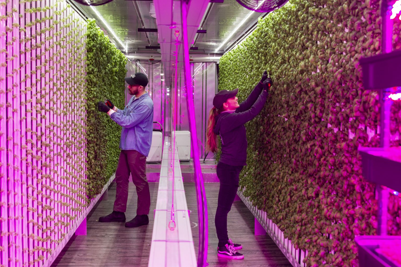 Square Roots: Increasing Access to Fresh Food