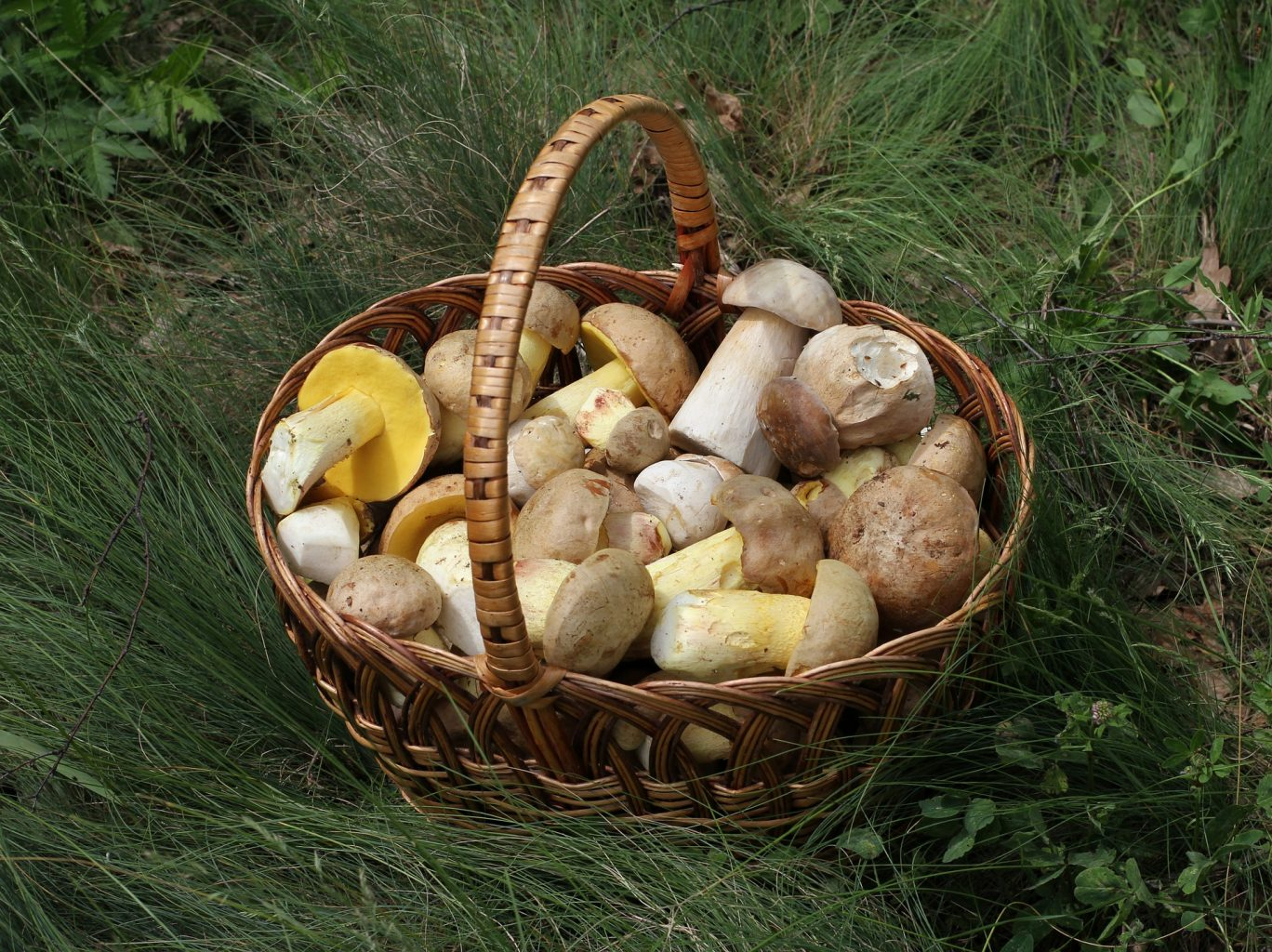 Into the Wild World of Mushroom Hunting—the Perfect Social Distancing Activity!