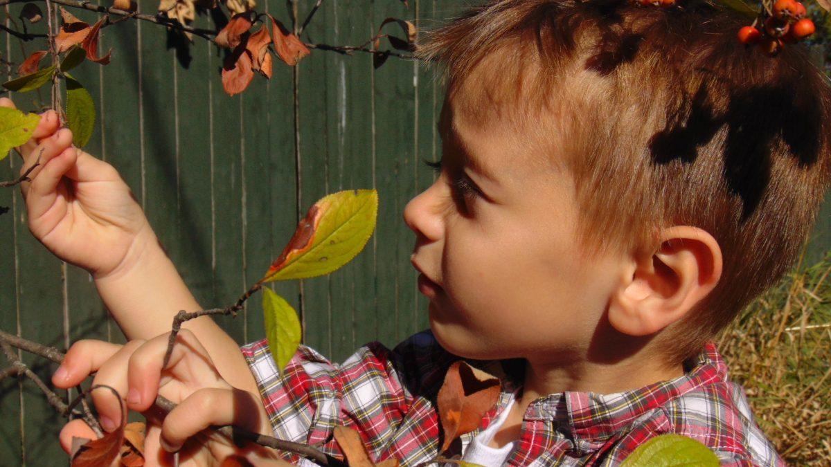 Image: little boy inspecting a leaf