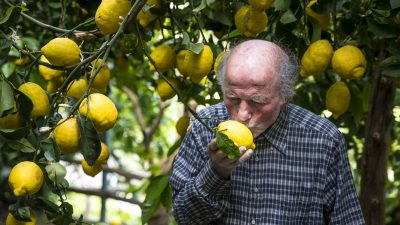 Image: Aceto kissing a lemon!