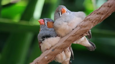 Image: Two birds having a rest on a branch