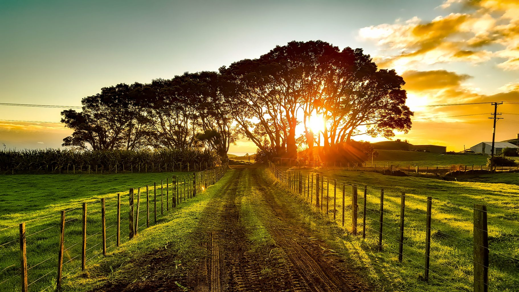 Image: dirt road going off into the distance with the sun setting behind some trees