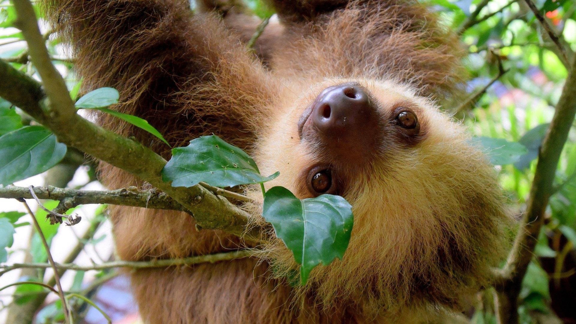 Image: Sloth smiling