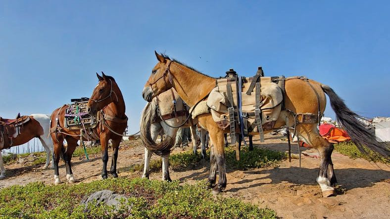 Image: Horses from Mustangs to the Rescue packing