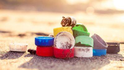 Image: hermit crab on a colorful pile of bottle caps