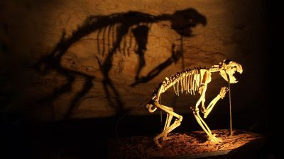 Image: skeleton of marsupial lion