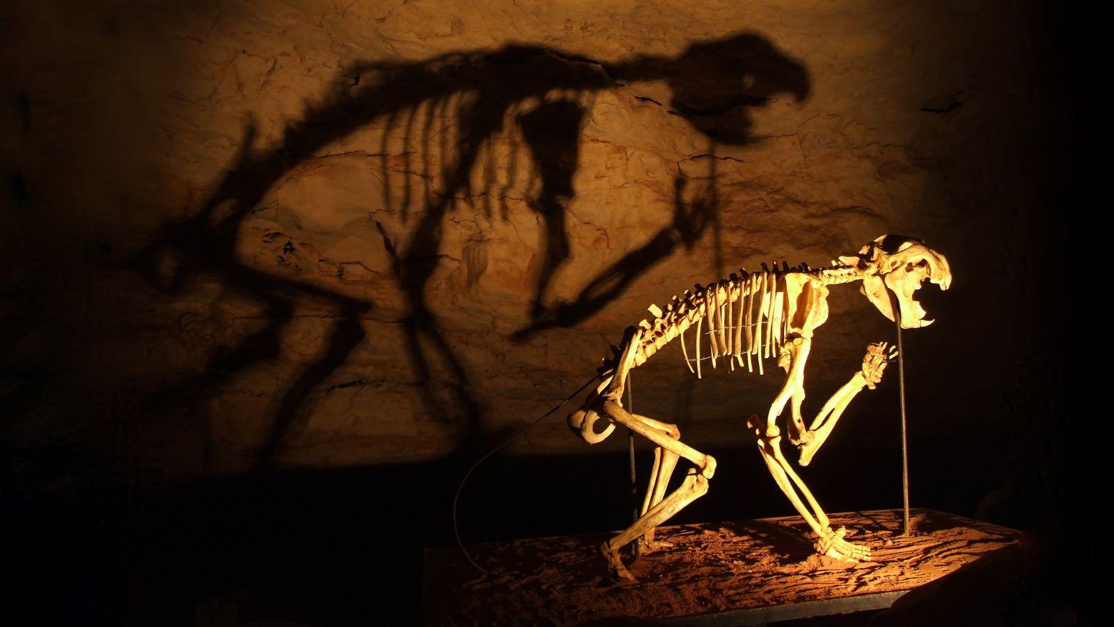 Image: skeleton of marsupial lion