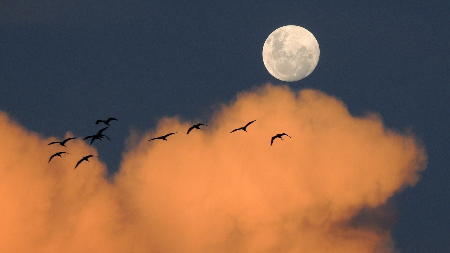 Image: Birds flying in front of a full moon