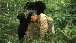 Image: Ben on the ground with two bear cubs playing on top of him
