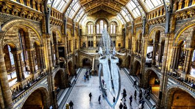 Image: Ginormous fossil hanging in the middle of a museum with golden arches