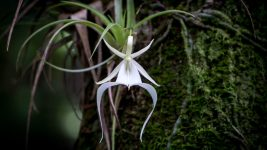 Image: The haunting ghost orchid