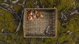 Image: a mushroom foraging trip -- basket with a knife and some found mushrooms