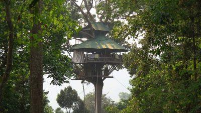 Image: Treehouse inside of a jungle