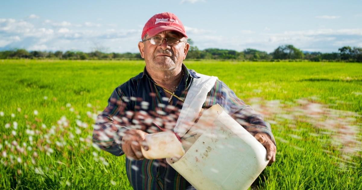 Image: Farmer in field looking at camera