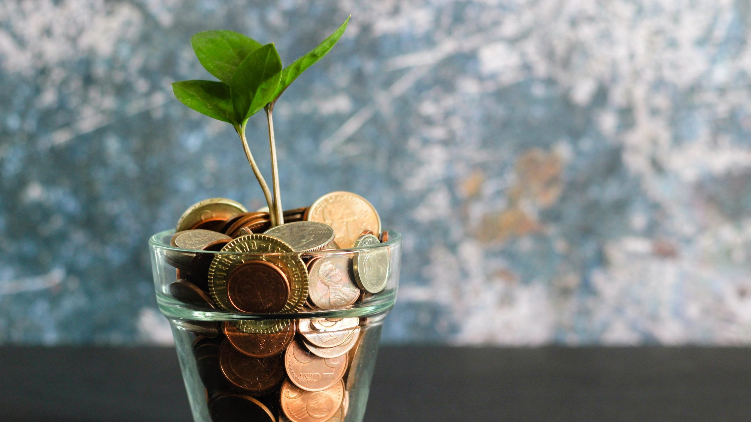 Image: Money Plant