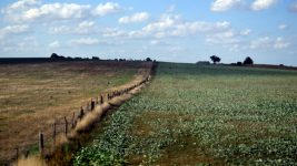Image: Greener pasture