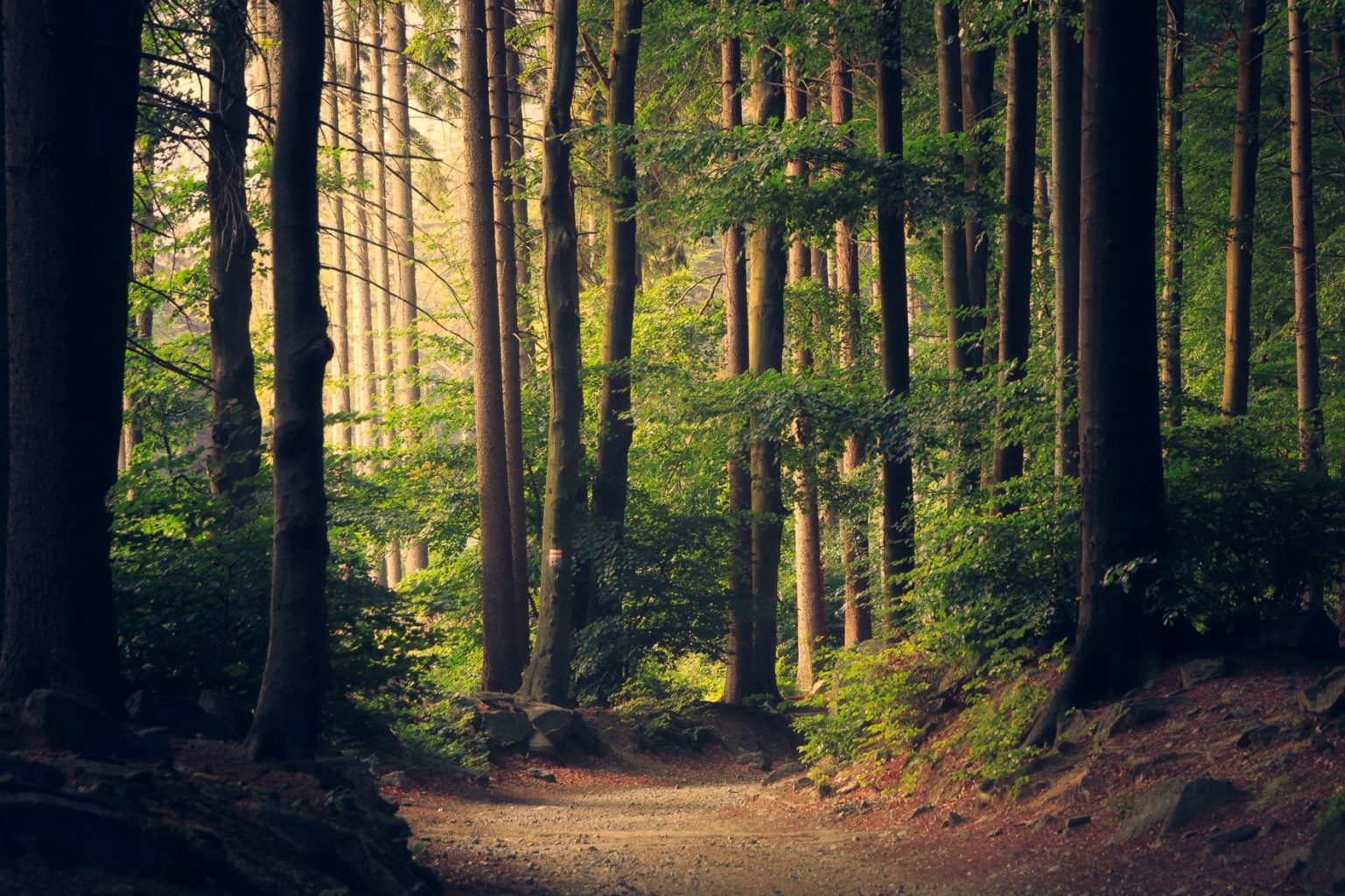 Image: Trees